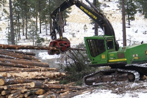 forestry-consulting-insurance